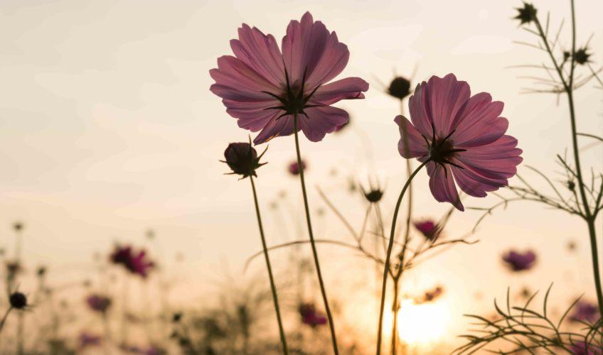 ruta flores autocaravana